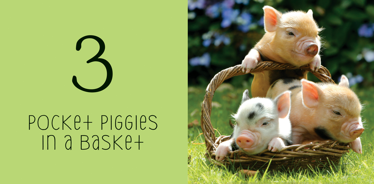 Workman Publishing Co Pocket Piggies: Numbers