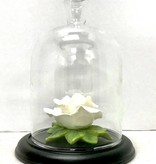 "5.25"" Wedding/Anniversary Rose"