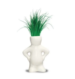 Lil Dude Plant