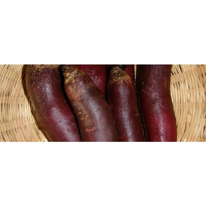 Betterave Cylindra - Bio (140 semences)