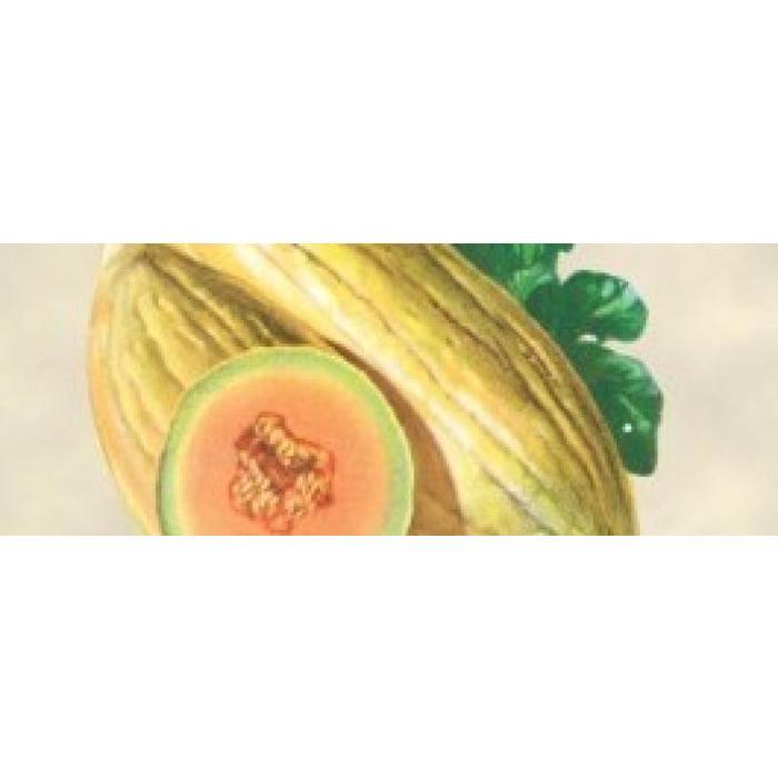 Melon Banana bio (25 semences)