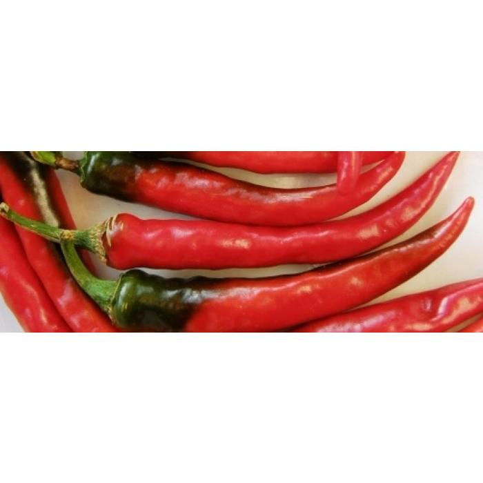 Piment cayenne - ring of fire bio