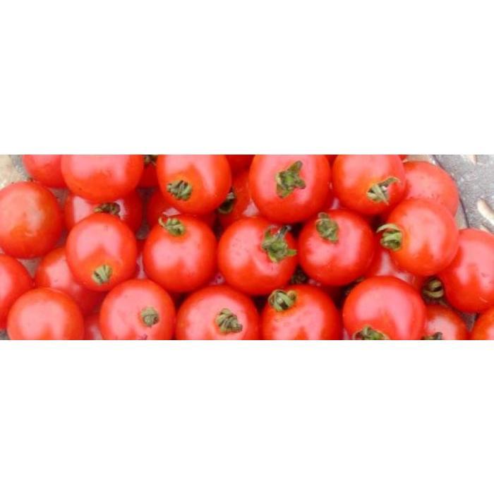 Tomate Sub-arctic bio