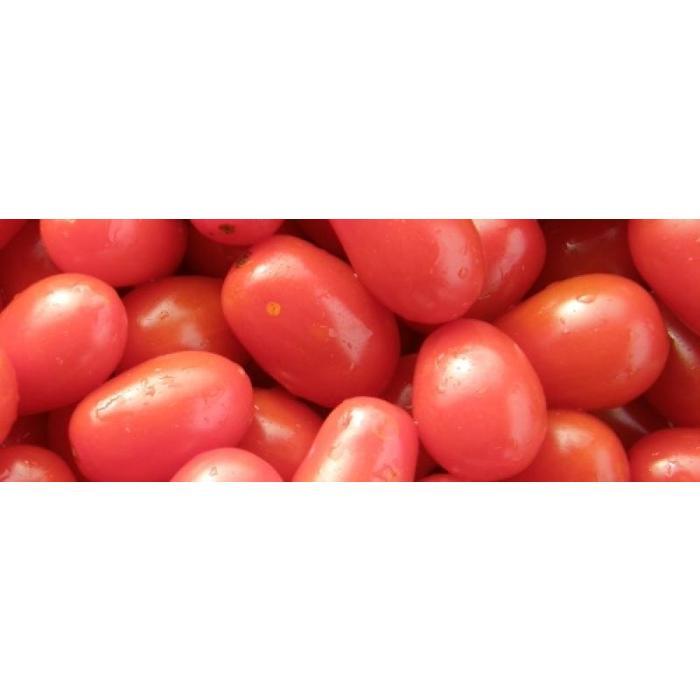 Tomate cerise Sprite bio, 35 semences