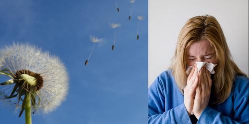 Combattre les allergies saisonnières naturellement