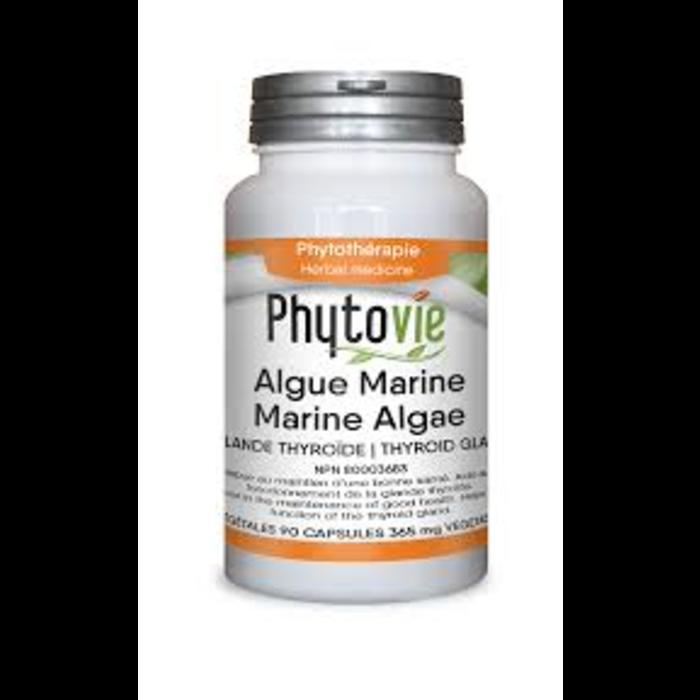 Algues marines en capsules 90 caps
