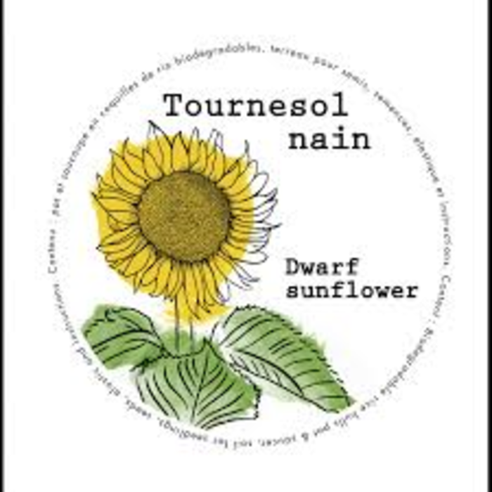 "Mini-pots 4"" Tournesol nain"