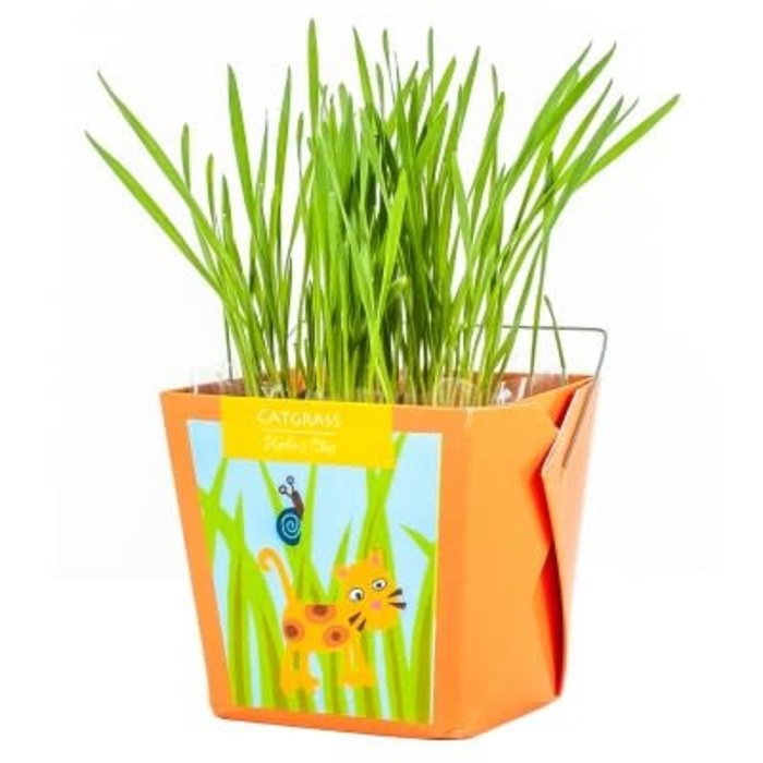 "Pot 4"" Boite à jardin junior - Herbe à chat"