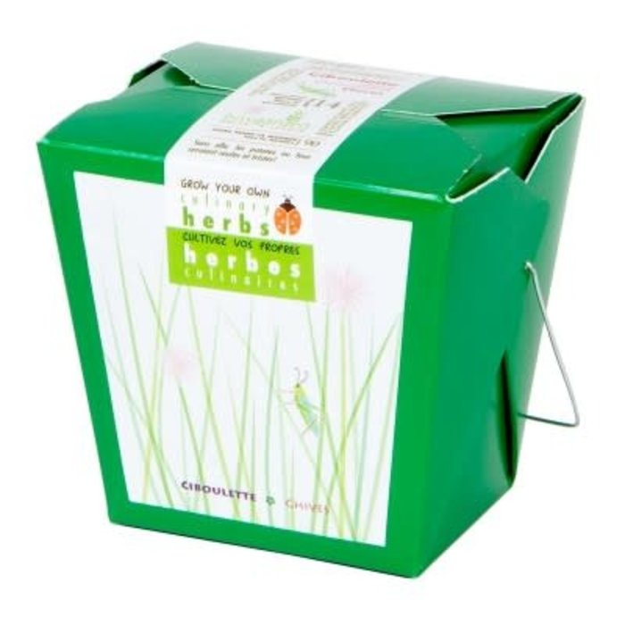 """Pot 4"""" Herbes culinaires - ciboulette"""