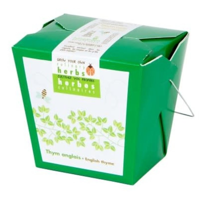 "Pot 4"" Herbes culinaires - Thym anglais"