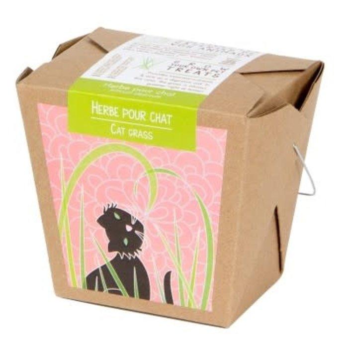 """Pot 4"""" Pousses santé bio - Herbe à chat"""