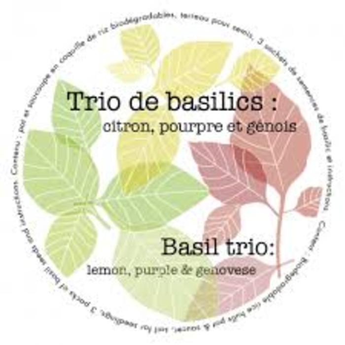 """Pot 7"""" trio biologique - basilics"""