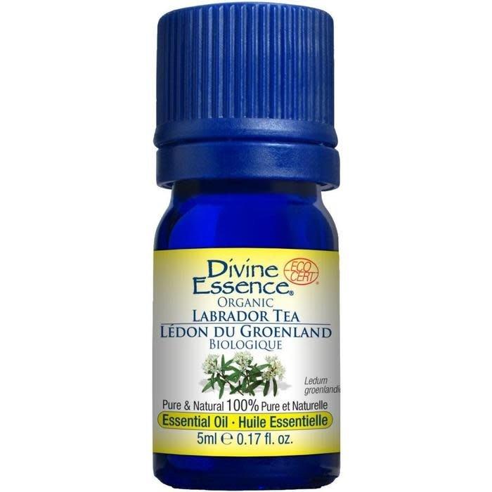 Huile essentielle The du Labrador bio (Ledum groenlandicum) 5 ml