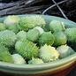 Concombres des Antilles bio (20 semences)