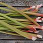 Rhubarbe Victoria Bio