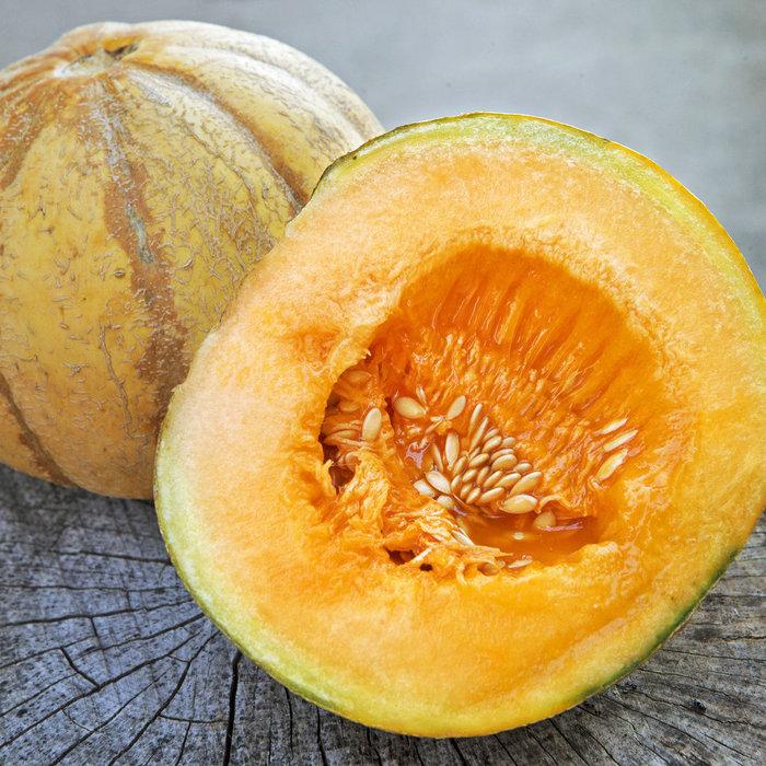 Melon brode Oka bio (25 semences)