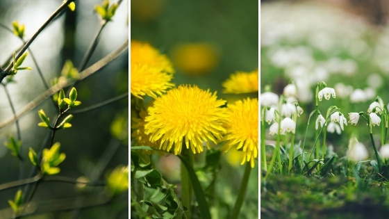Nettoyage du printemps : mythes et réalités