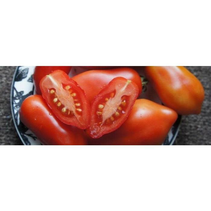 Tomate italienne Dix doigts de Naples bio 35 semences