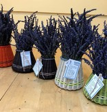 Lavender Wind Basket of Lavender, Medium