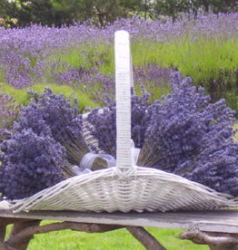 Lavender Wind Tour - Guided Walking