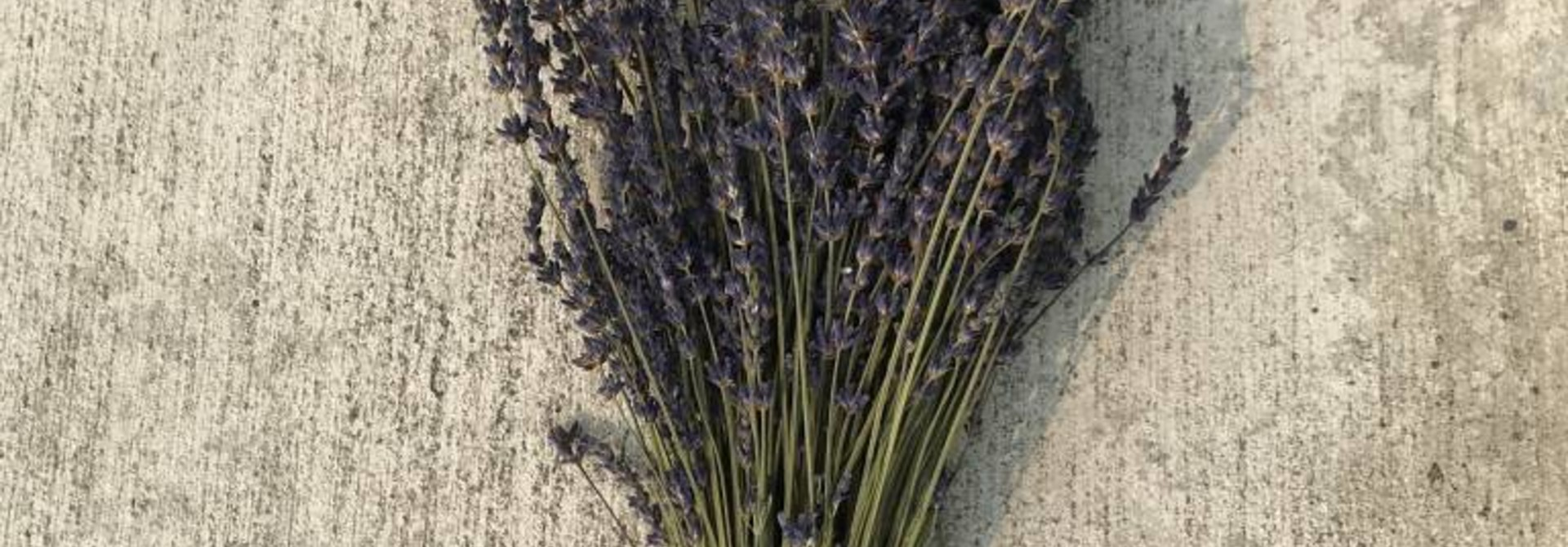 Dried Bunch of Lavender - Field Harvested
