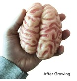 Copernicus Grow A Brain Polymer
