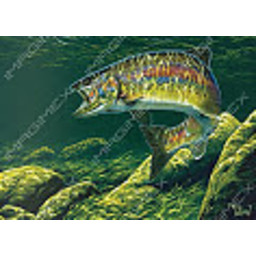 Imagimex Greeting Cards Hooked Salmon