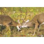 Nice Targets Battling Bucks