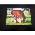 Imagimex Greeting Cards Horse And Colt