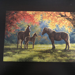 Imagimex Greeting Cards Horse Family