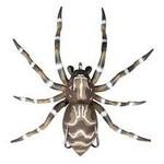 Lunkerhunt Phantom Spider 1/4OZ