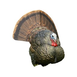 Avian-X LCD Tom Strutter Turkey Decoy
