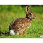 "Nice Targets TNT Rabbit Target 11.25"" x 14.25"""