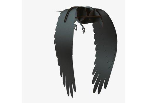Ibride Ibride Raven Karl