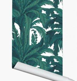 PaperMint Papermint wallpaper Musa