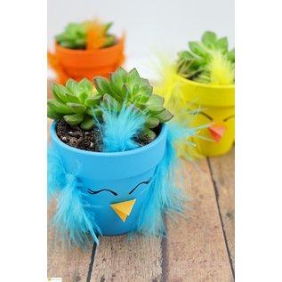 Little Miss Fancy Plants Kids Spring Chick Succulent Planting Workshop