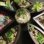 Little Miss Fancy Plants Fancy Plants Party- Sept 20 BOYB