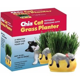 Chia Cat Grass Chia Planter