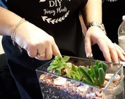 DIY Fancy Plants Classes
