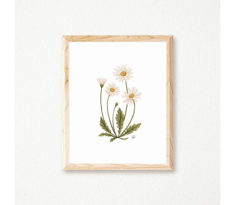 Daisy Botanical Print 8x10