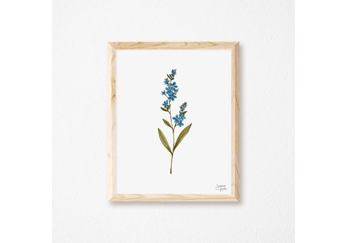 Forget-me-not Print 8x10