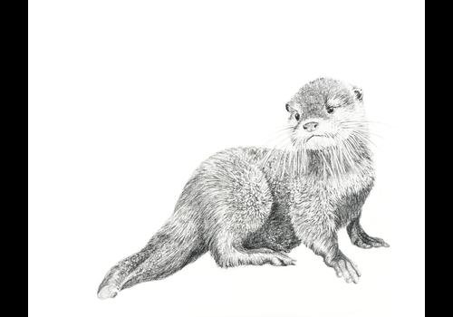 Baby Otter Print 8x10