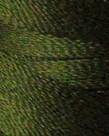 Floriani Floriani - PF0238 - Olive Drab