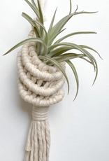 The Hippie's Daughter Signature Pods W/Air Plant
