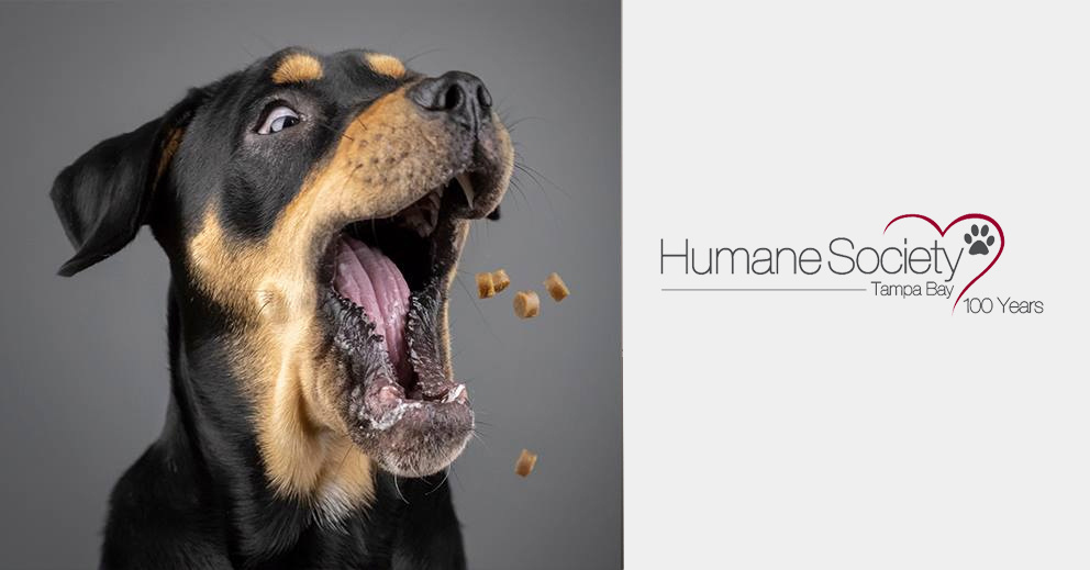 Photo Shoot Fundraiser for Humane Society Tampa Bay June 23, 2019