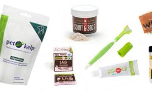 The Gift of Health: Gifts to get your canine on the road to health