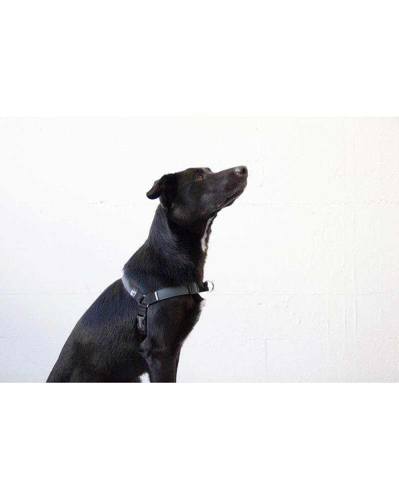 Wildebeest Linden No Pull Dog Harness