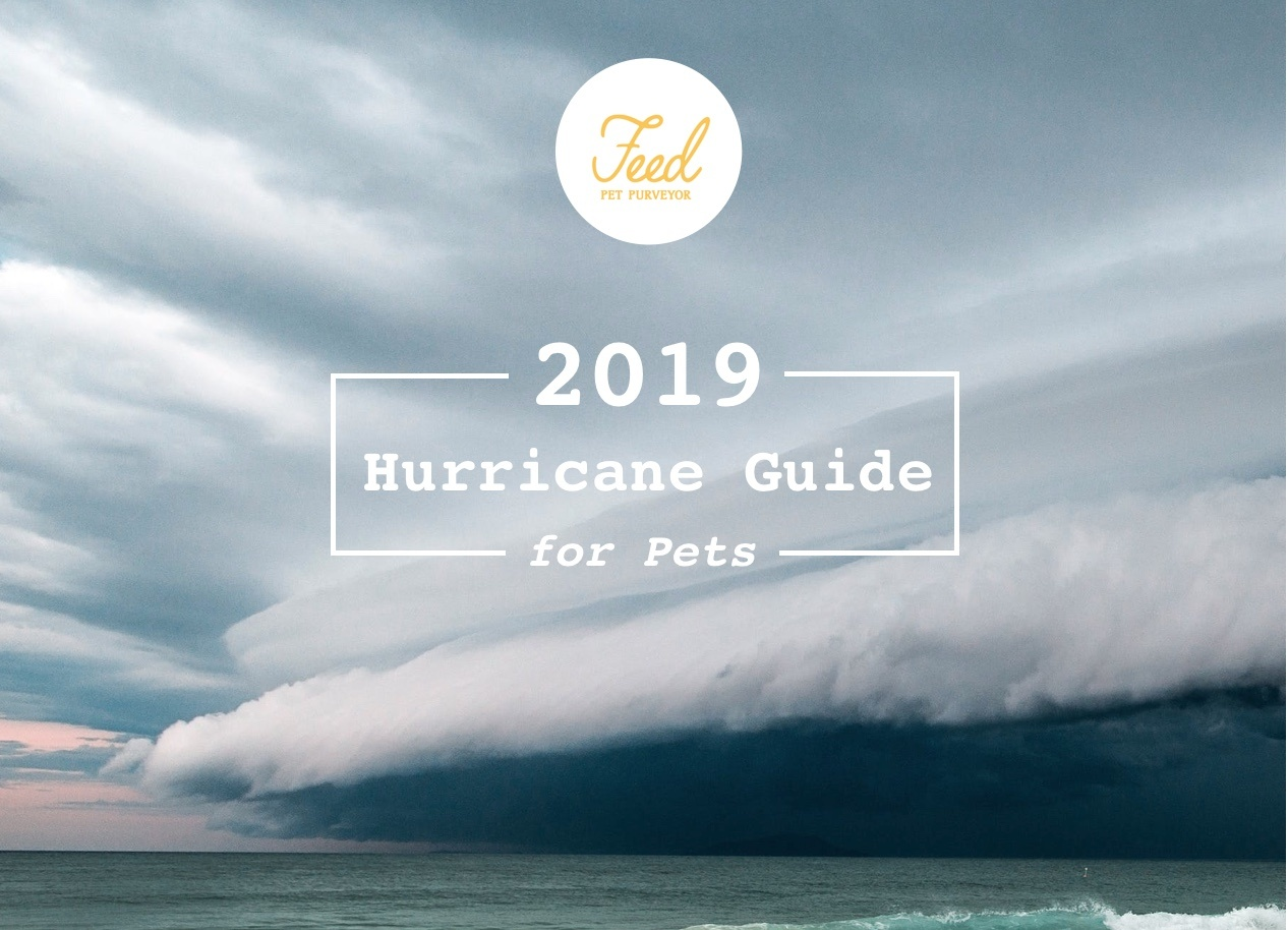 Hurricane Preparedness Guide 2019