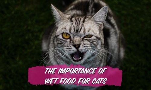 The Importance of Moisture in Cat Food