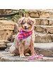 The Foggy Dog Sunset Bandana